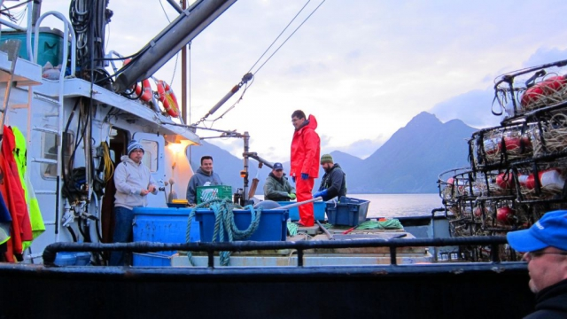 Haidas start a busy year fishing Guuda Gii Gayd (prawns) and k_'uust'an (Dungenous crabs) at  Tllgaa Guuxyangts'aas Gyuu (Place Into Which the Water Flows Broadly, Cumshewa Inlet). Photo: Laina Bell