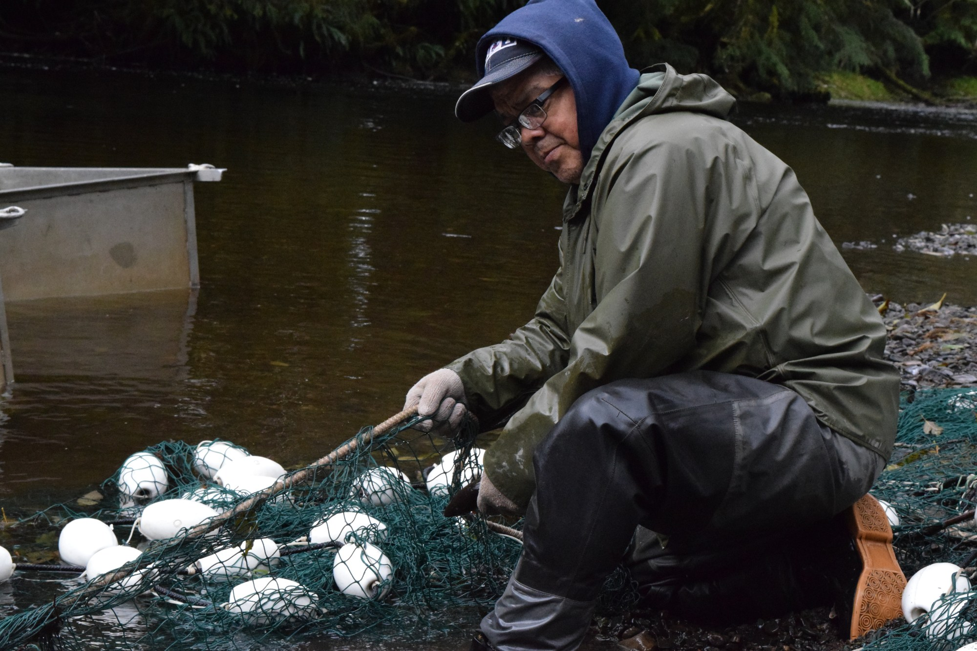 Haida Fisheries Staff monitor taay.yii (Coho salmon) returning home to the Diina in November. Pictured: Ken Williams